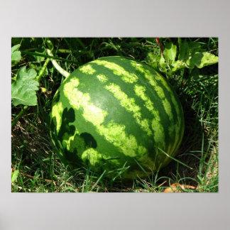 Little Watermelon Poster
