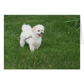 Little White Dog Greeting Card