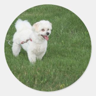 Little White Dog Round Sticker