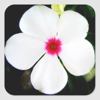 Little White Vinca Flower Square Sticker
