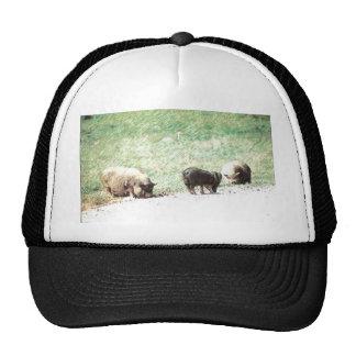 Little Wild Pigs Sketch Hat