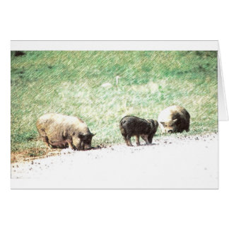Little Wild Pigs Sketch Greeting Card