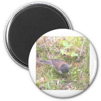 Little Yard Bird 6 Cm Round Magnet