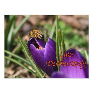 Live Deliberately w/honey bee pollinating Crocus Photo Print