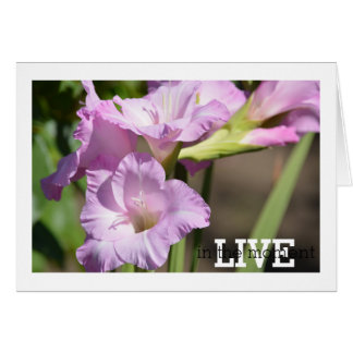 Live in the Moment Gladiolus Card