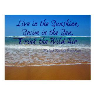 Live in the Sunshine, Swim and Drink Postcard