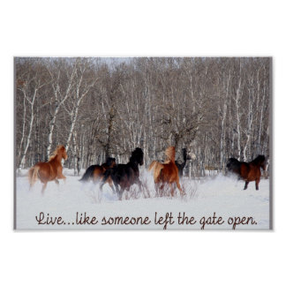 Live Life Like someone left the gate open Poster