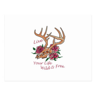 Live Life Wild And Free Postcard