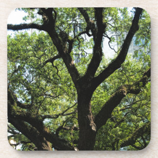 Live Oak In Downtown Savannah Coaster