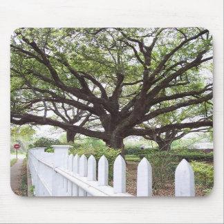 Live Oak Tree, Natchez, MS  Mouse Pad