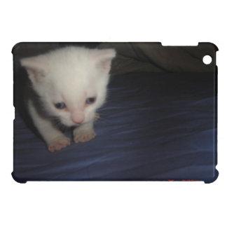 Livid Kitten white