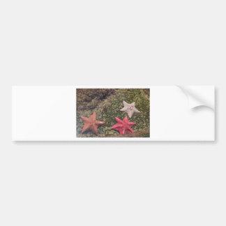 Living starfish (4).JPG Bumper Sticker