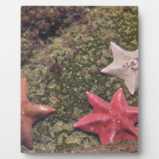 Living starfish (4).JPG Display Plaques