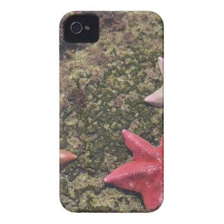 Living starfish (4).JPG iPhone 4 Covers