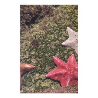 Living starfish (4).JPG Personalised Stationery