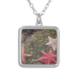 Living starfish (4).JPG Silver Plated Necklace