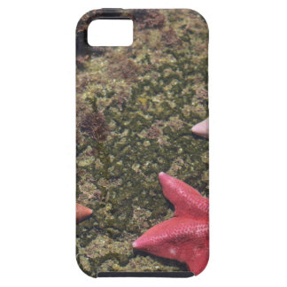 Living starfish (4).JPG Tough iPhone 5 Case