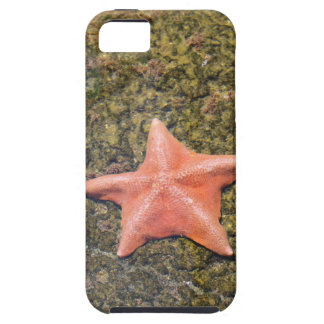 Living starfish.JPG iPhone 5 Cases