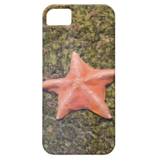 Living starfish.JPG iPhone 5 Cover
