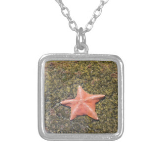 Living starfish.JPG Silver Plated Necklace