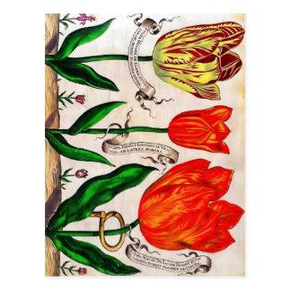 Livres De Fleurs Postcard