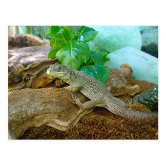 Lizard in a Terrarium Postcard