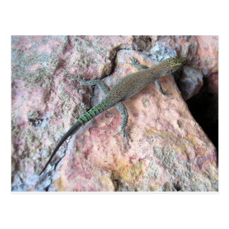 Lizard on the Wall Postcard
