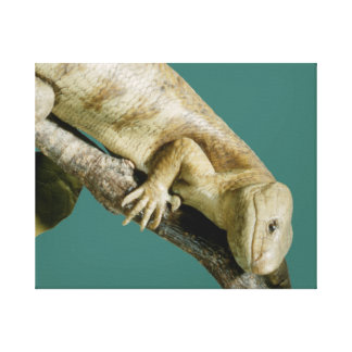 "Lizard Reptile Animal Happy ""happy lizard"" Canvas Print"