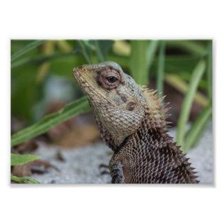 Lizard Reptile Nature Photography Photo Art