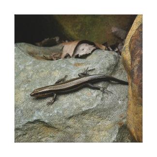 Lizard, Wrapped Canvas Print.