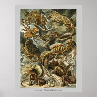 Lizards - Ernst Haeckel Poster