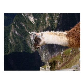 Llama at Machu Picchu Postcard