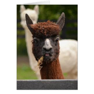 Llama - blank greetings card