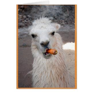 Llama eating carrot. card