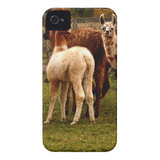 Llama family iPhone 4 Case-Mate cases