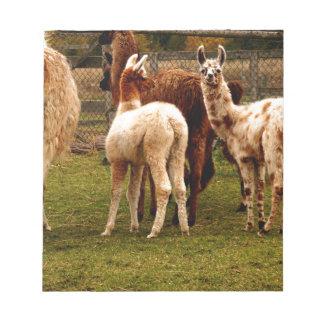 Llama family notepad