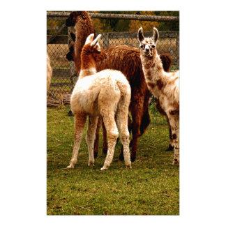 Llama family stationery