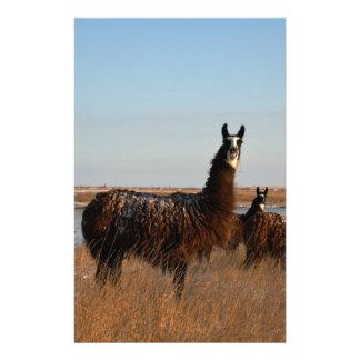 Llama Guardian Custom Stationery