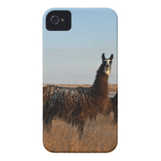 Llama Guardian iPhone 4 Case-Mate Cases