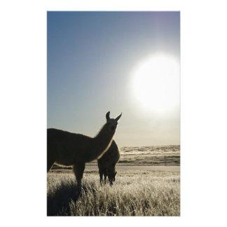 Llama morning personalized stationery