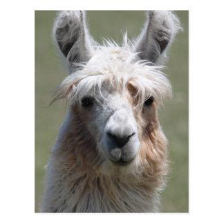 Llama Postcard