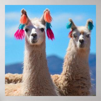 Llama Poster Art