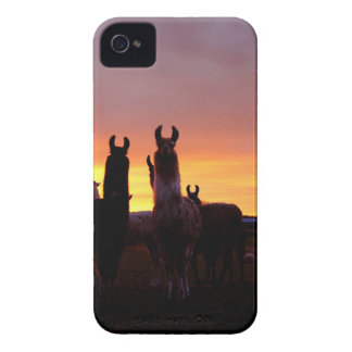 Llama Sunrise iPhone 4 Cases