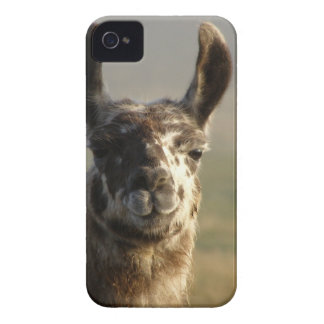 Llama Watch iPhone 4 Case-Mate Case