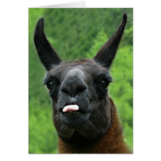 Llama with Attitude - Sticking out Tongue Photo Card
