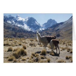 Llama with Nursing Baby Bolivia Mountains Card