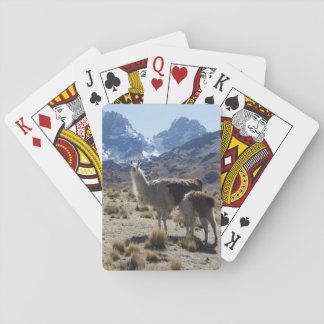 Llama with Nursing Baby Bolivia Mountains Playing Cards
