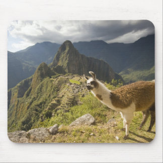 LLamas and an over look of Machu Picchu, Mouse Pad