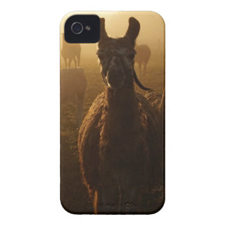 Llamas in the Mist iPhone 4 Case-Mate Case