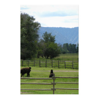 Llamas pastured in a mountain valley custom stationery